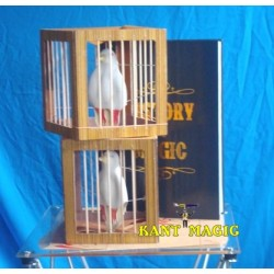 FIRE BOOK AND DOVE CAGES